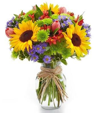 kermits, montecasino and sunflowers