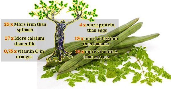 Avez-vous entendu parler de « l'arbre miracle » ? Cet arbre pourrait guérir 300 maladies y compris les tumeurs et le diabète !