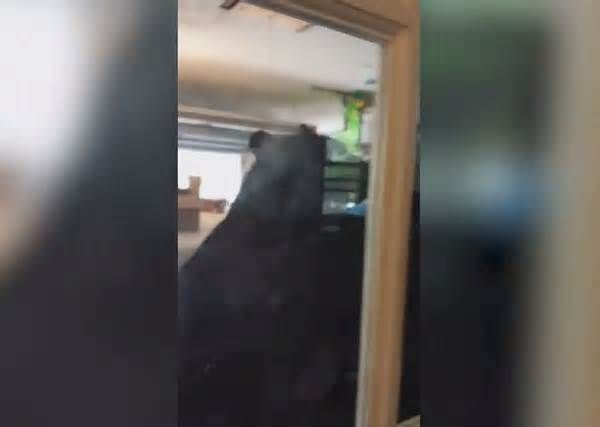 CAUGHT ON CAMERA: Giant Bear Found in Orlando Garage, Scared Away by Homeowner (WKMG) — A homeowner in Orlando recorded video of a giant bear ... call on hold when he noticed a bear roaming through his garage. To his shock, banging his hand on the glass door, just feet from the animal, wasn't enough to scare it away.