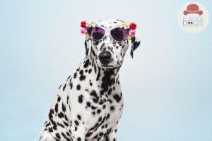 """Fotografía publicitaria de mascotas. Último trabajo profesional para la Agencia de Casting Animal """"Publicadogs""""."""
