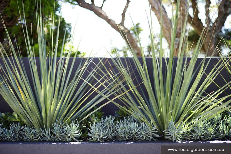 Garden Design: Caringbah | Secret Gardens