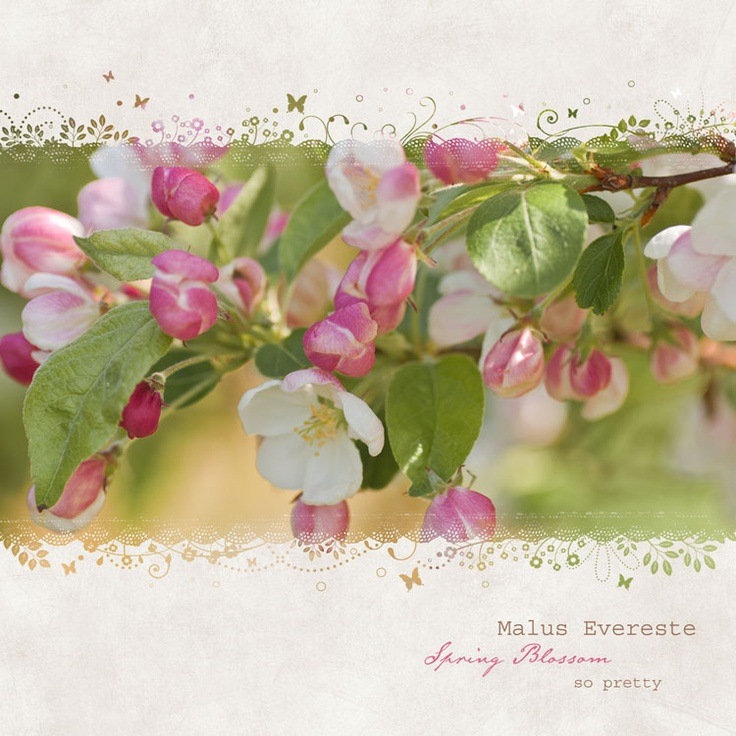 Spring Blossom...so pretty Spring blossom, Spring, Flowers