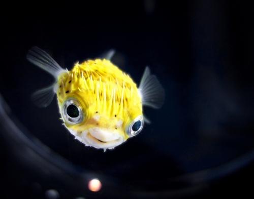 Pin Van Anya Hobley Op Underwater Oceaan Vis