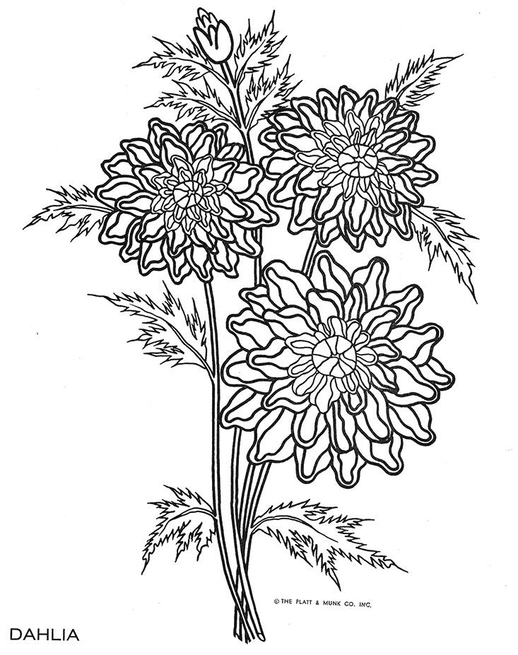 63 best My Adult Coloring Book Pages images on Pinterest