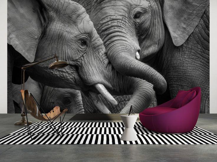 21 besten spectacular wildlife @ ASCréation Bilder auf Pinterest - fototapete wohnzimmer schwarz weiss