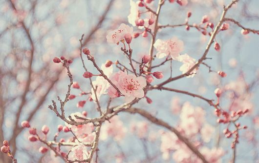 I love almost anything with cherry blossoms on it.