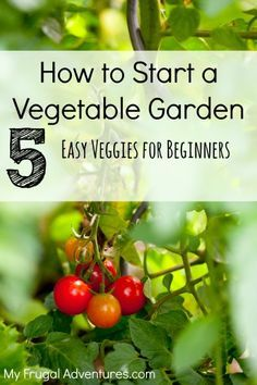 How to Choose Plants for Your First Vegetable Garden - My Frugal Adventures. all from seeds: green beans, cucumbers, lettuce seed mix, and tomatos!