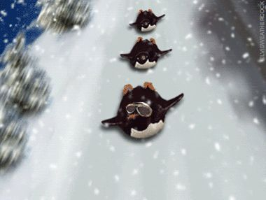 Animated Gif Penguins | ... animations animation animated gif gifs merry christmas fun in the snow