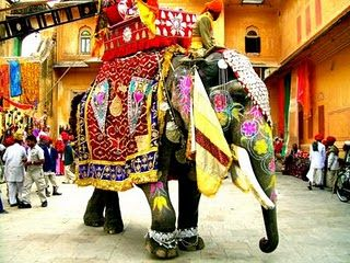 Elephant dressed up in India.