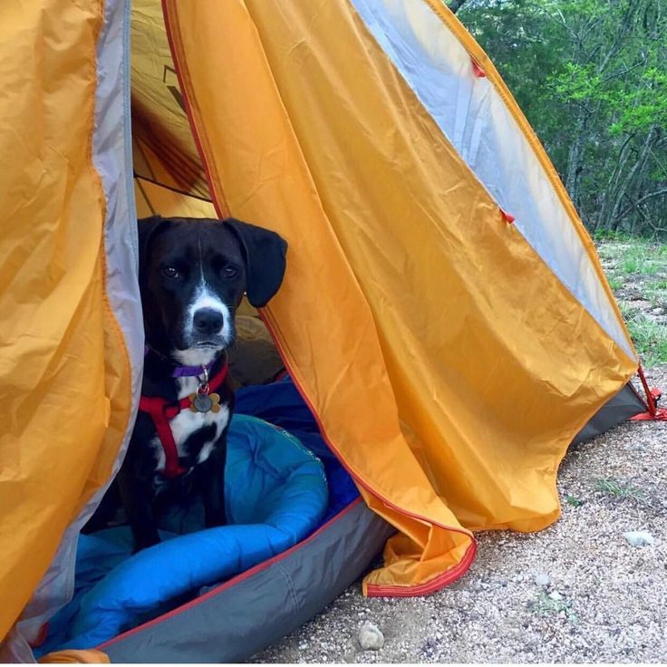 Safety tips for camping/hiking with dogs in Arizona? Going to AZ for the first time and there seem to be more possibilities for a dog to get injured than in CA. (Snakes scorpions spiders toads etc.) Thanks! #camping #hiking #outdoors #tent #outdoor #caravan #campsite #travel #fishing #survival #marmot http://bit.ly/2uVZOGu
