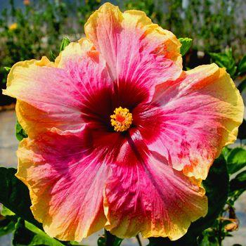 Die Besten 17 Bilder Zu Flowers Auf Pinterest | Hausgemachte Hot ... Garten Ideen Tropisch Exotisch Bilder
