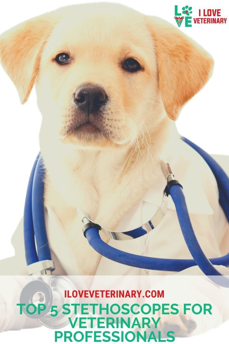 Top 5 Stethoscopes For Veterinary Professionals In 2020 Vet Questions Dog Parents Dogs