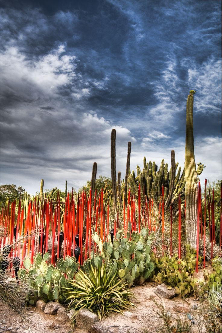 The Chihuly exhibit at the Desert Botanical Gardens in Phoenix, AZ