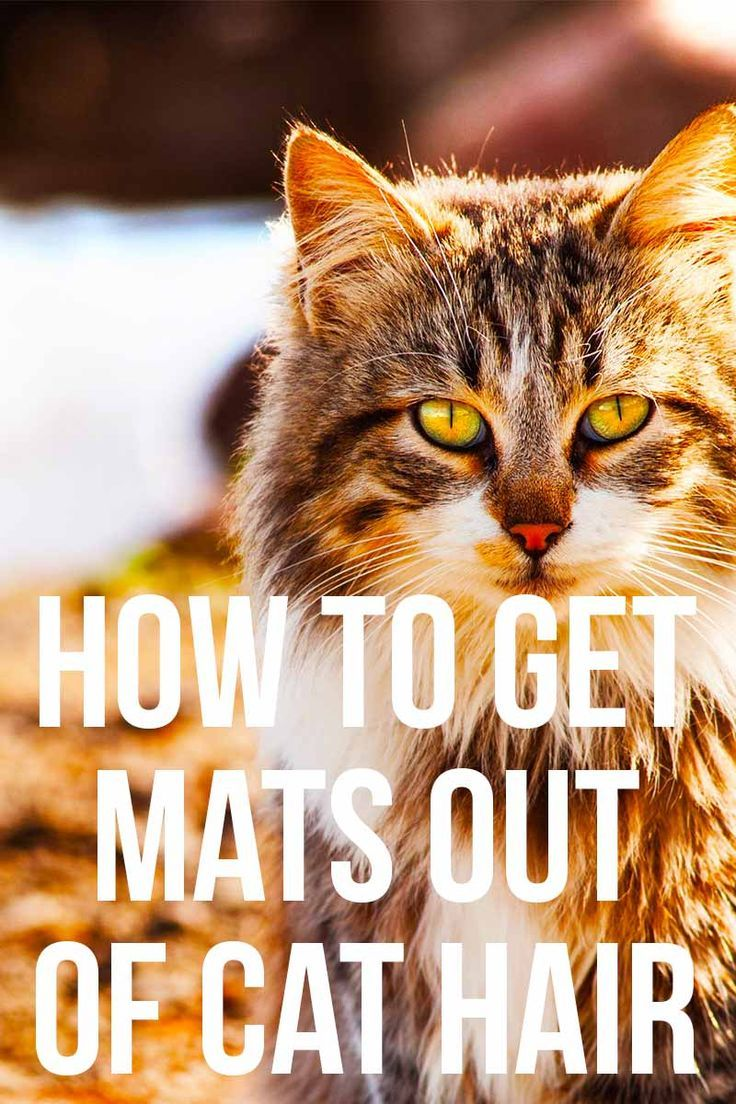 How To Get Mats Out Of Cat Hair Our Favorite Products