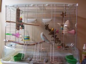 Parakeet cage setup..
