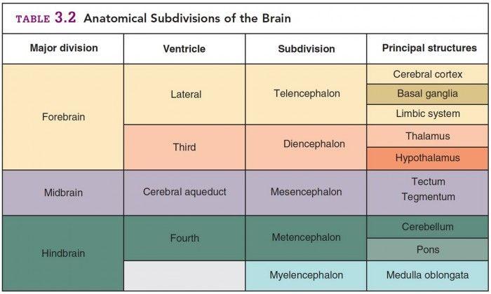 Subdivision of anatomy