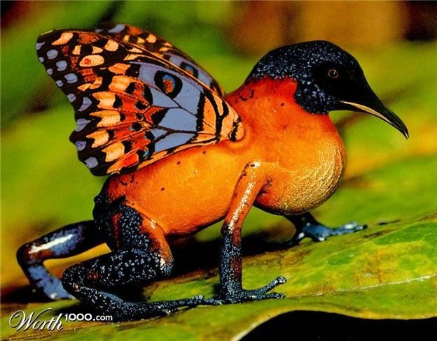 Amazon Rainforest Butterflies | this is a butterfroguin it ...