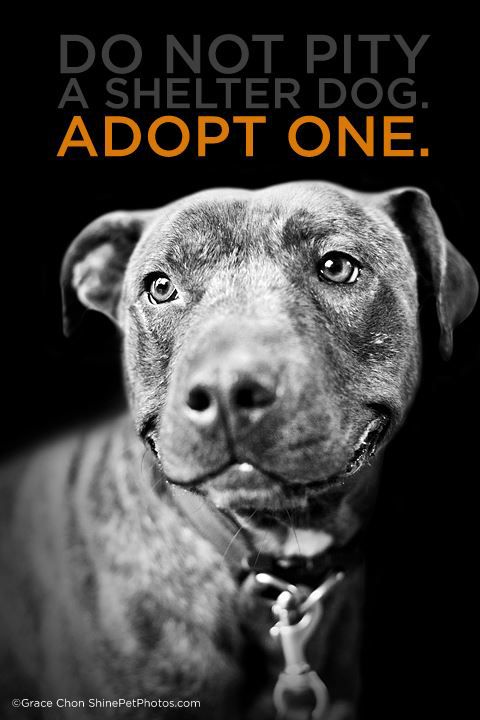 """""""Do not pity a shelter dog. Adopt one."""" --- Same thing goes for the cats and other animals in shelters! Being an animal up for adoption does not make them any less capable of being an amazing pet and companion. Consider giving an adoptable animal in your town a new loving home. --- The Humane Society of Fremont County Adoption Center is located in Canon City, CO. http://www.canoncityhumanesociety.org/"""
