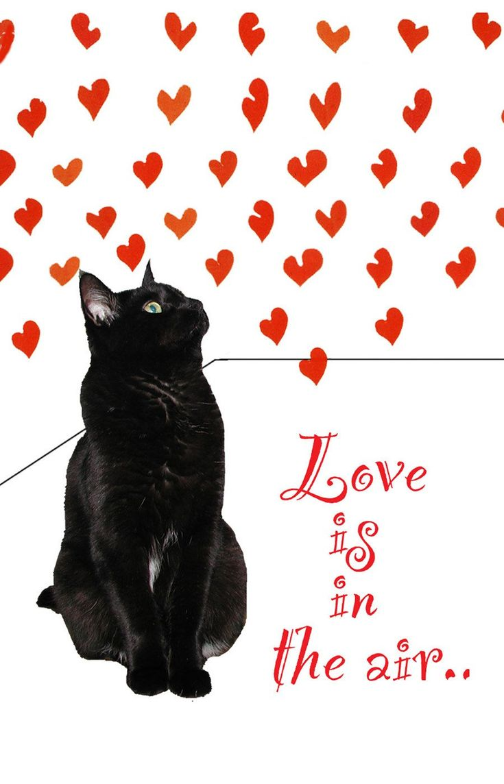 81 Best Valentine Cats Images On Pinterest Cats Baby Kittens And