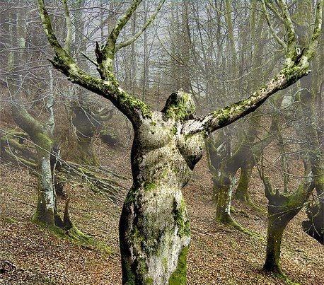 Piccsy :: Tree Of Life