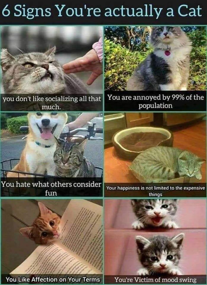 Guess I M A Cat Then Animal Memes Cat Memes Cats