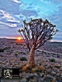 R 359 Kokerboom roete