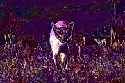 "New artwork for sale! - "" Cat Mieze Siamese Cat Siamese  by PixBreak Art "" - http://ift.tt/2uweIC9"
