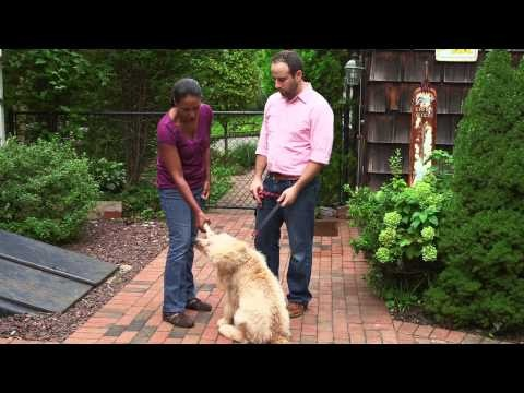 "Dog Training: The ""Drop It"" Command - Purina® Puppy Chow®"