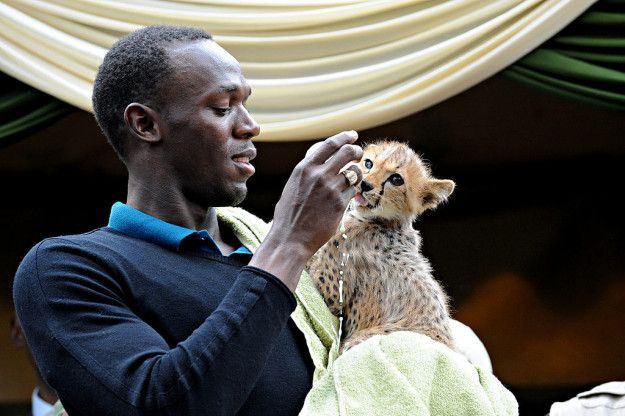 "While he is no doubt the fastest man alive, he's also fittingly adopted a cheetah, the world's fastest land animal // 15 Facts About Usain Bolt That Will Make You Say ""Holy Shit"""
