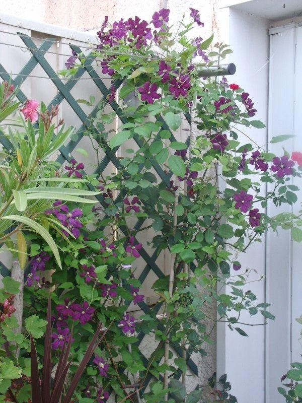 rosier-et-clem-etoile-violette