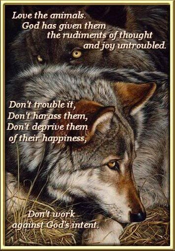 Quotes On Saving Wolf | WOLFS