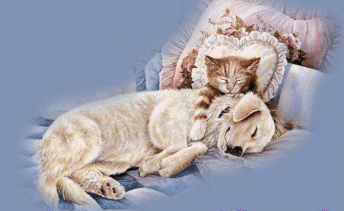 piesek i kotek śpią