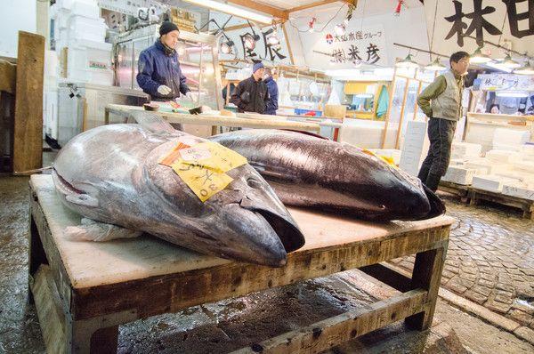 An Inside Look at Tsukiji Fish Market, Tokyo | http://www.everintransit.com/tsukiji-fish-market-tokyo/