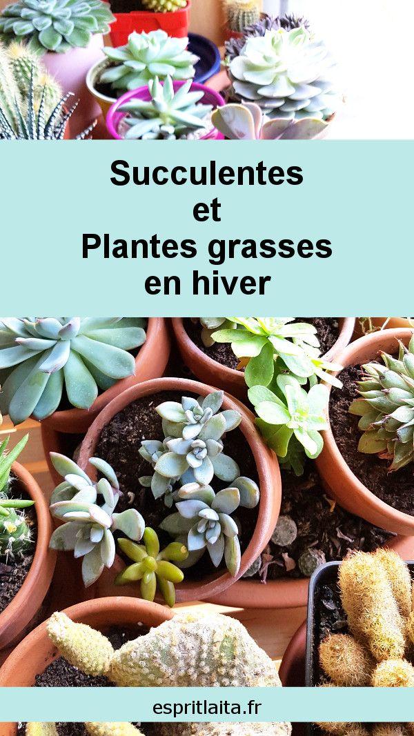 Comment Conserver Les Succulentes En Interieur Cet Hiver Plantes
