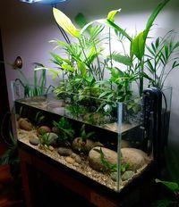 Pecera con plantas grandes