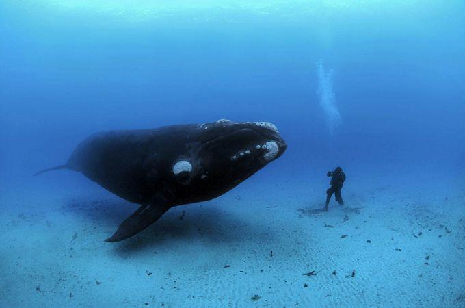 Brian Sherry é um fotojornalista especializado em revelar os mistérios da vida submarina. Peixes, baleias, tartarugas, focas, lulas e polvos são alguns dos modelos do artista, cujos registros são d…