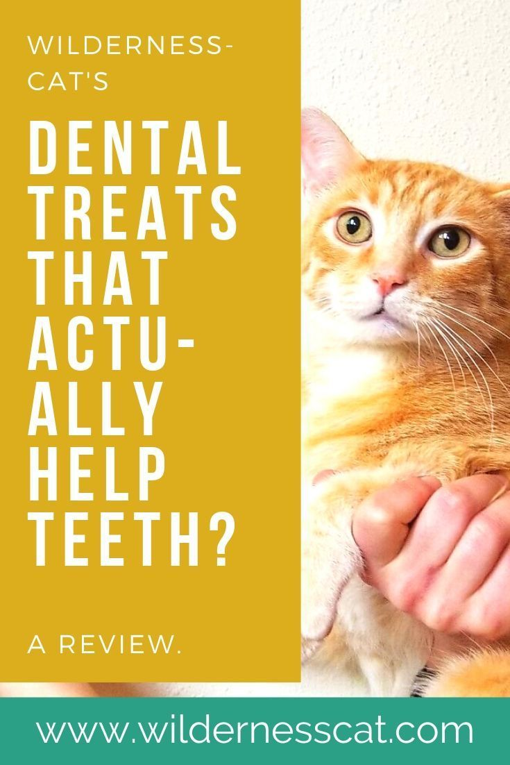 Inclover Smile Cat Dental Treats We Tried Functional Cat Treats Dental Treats Dental Cat Treats