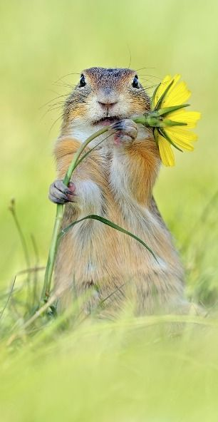 cutie....Animal Pictures, Squirrels, Funny Animal Pics, Flower Power, Flower Beds, Animal Stories, Little Animal, Animal Photos, Yellow Flower