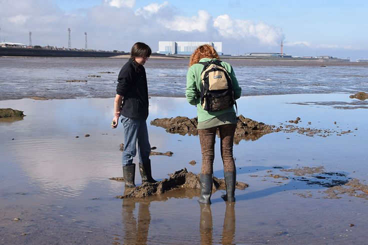 Two volunteers record the remains of a submerged forest on Cleethorpes beach
