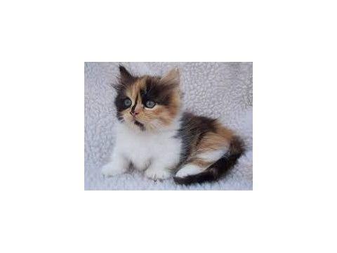 kitten always purring