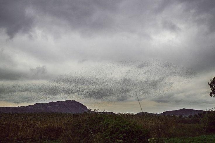 The birds take over the sky! (photo: Dionysia Mpousdouka) #navarino #pylos #visitgreece #greece #peloponnese #messinia