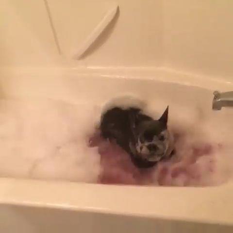Ich habe noch nie in meinem Leben einen Hund gesehen, der so begeistert von einem Bad war – Tierische Videos