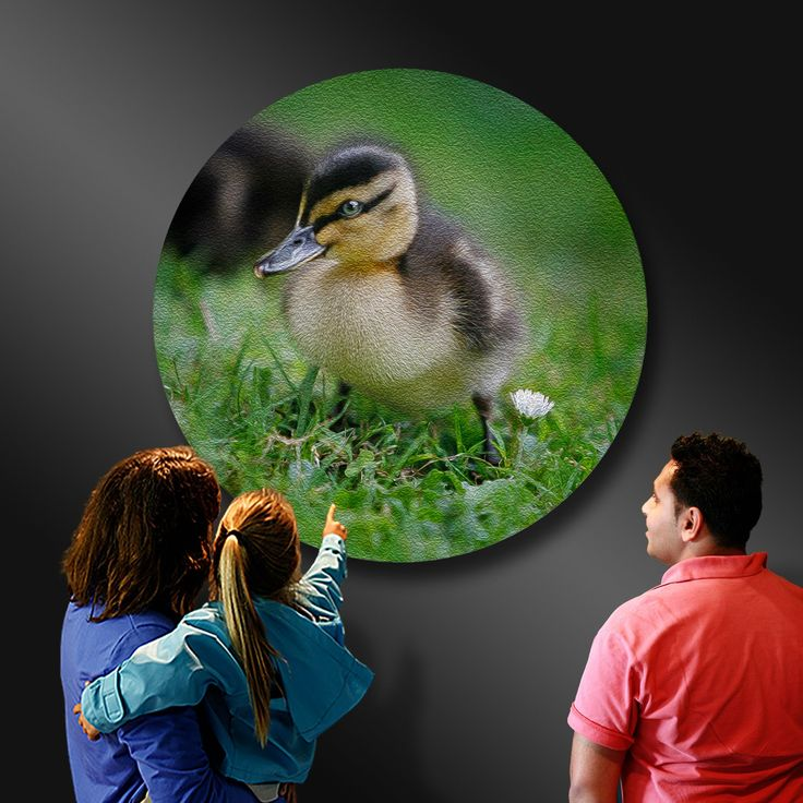MALLARD DUCKLING - New life and simple joys to behold - Ian Anderson Fine Art . http://ianandersonfineart.com/blog/