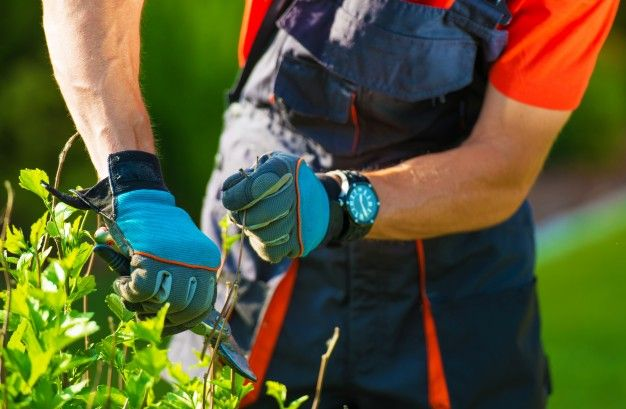 Gardening Services Perth: How to Appoint the Best Gardeners?
