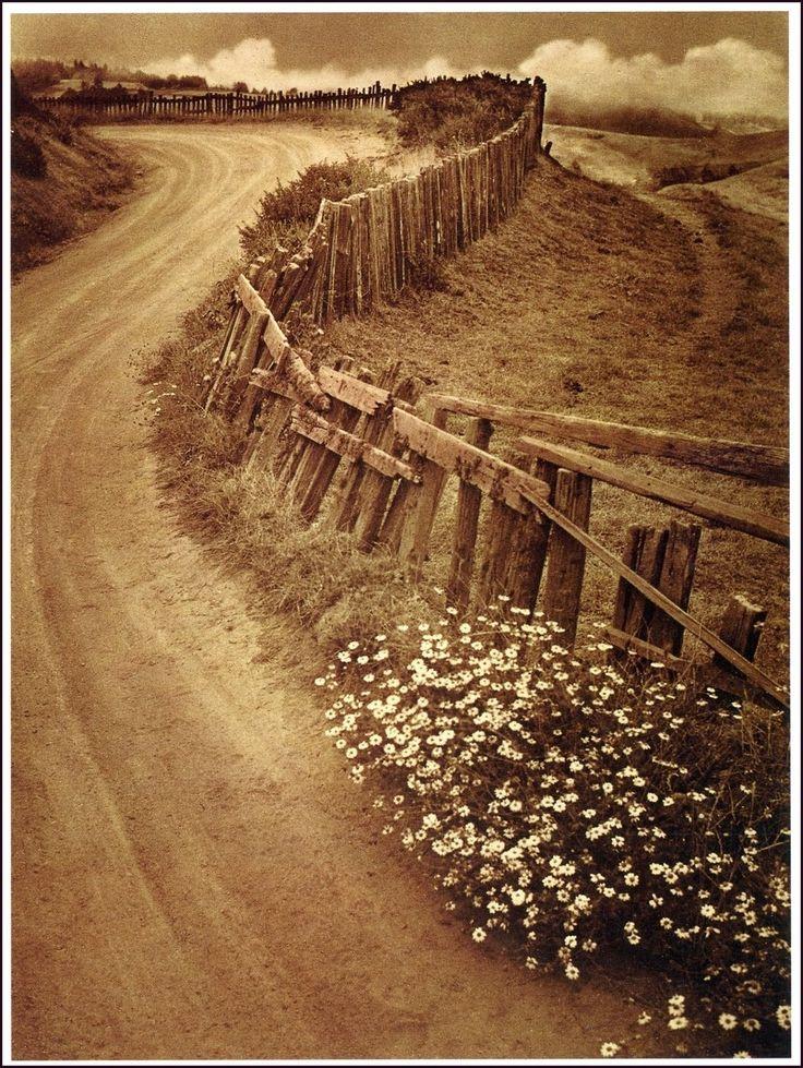 Daisy Trail, 1938