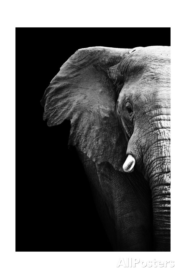 Artistic Black And White Elephant Art Print at AllPosters.com