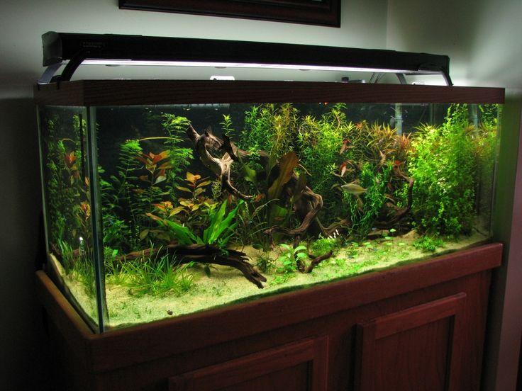 17 best ideas about 75 gallon aquarium on pinterest for Fish tank divider 75 gallon