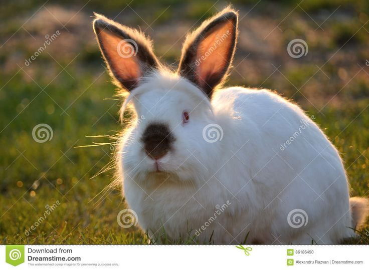 Rabbit - Download From Over 56 Million High Quality Stock Photos, Images, Vectors. Sign up for FREE today. Image: 86186450