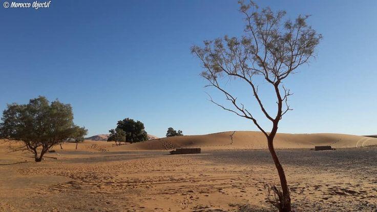 Assegwas ameggaz 2968!   Happy new Amazigh year!  http://www.morocco-objectif.com/  #moroccoobjectif #2968 #amazigh #berber #assegwasameggaz #newyear #celebration #culture #desert #sahara #merzouga #sanddunes #camelride #life #nomad #travel #traveler #travelphotography #travelgram #instatravel #instagram #vacation #amazingplaces #morocco #maroc #marruecos #marokko  Morocco desert tours  Sahara trips from Tangier