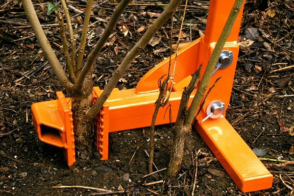 how to kill shrub stumps and roots